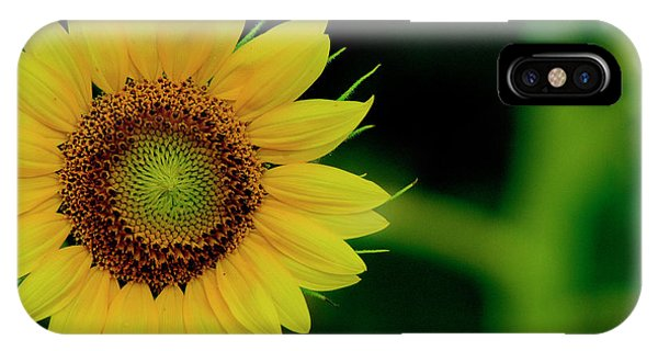 IPhone Case featuring the photograph Sunflower 2017 10 by Buddy Scott