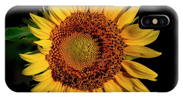 IPhone Case featuring the photograph Sunflower 2017 12 by Buddy Scott