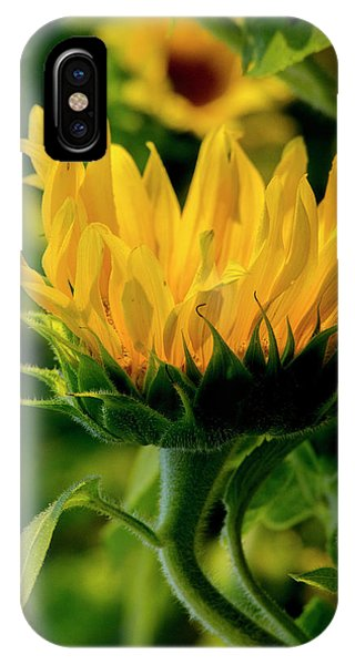 IPhone Case featuring the photograph Sunflower 2017 13 by Buddy Scott