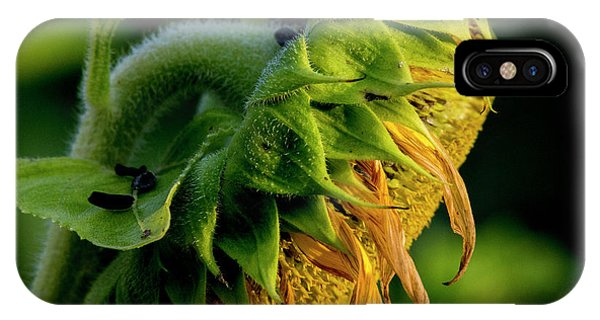 IPhone Case featuring the photograph Sunflower 2017 14 by Buddy Scott