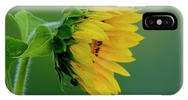 IPhone Case featuring the photograph Sunflower 2017 2 by Buddy Scott