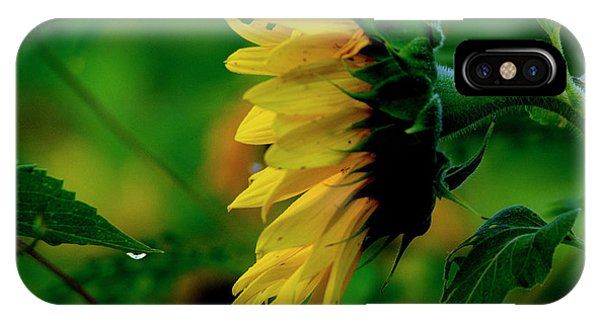 IPhone Case featuring the photograph Sunflower 2017 3 by Buddy Scott