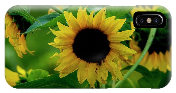 IPhone Case featuring the photograph Sunflower 2017 5 by Buddy Scott