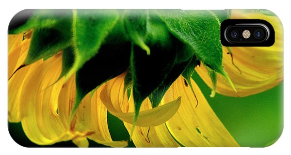 IPhone Case featuring the photograph Sunflower 2017 6 by Buddy Scott