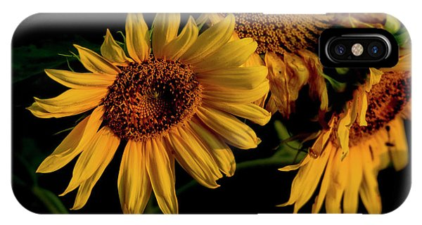 IPhone Case featuring the photograph Sunflower 2017 7 by Buddy Scott
