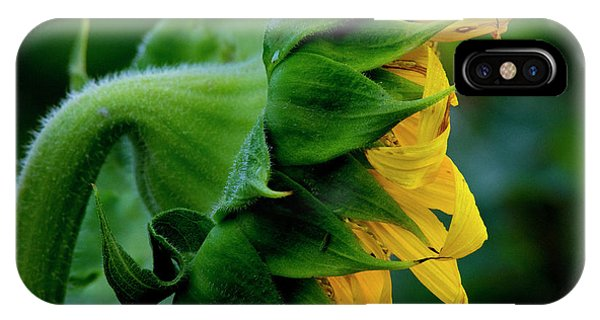 IPhone Case featuring the photograph Sunflower 2017 8 by Buddy Scott