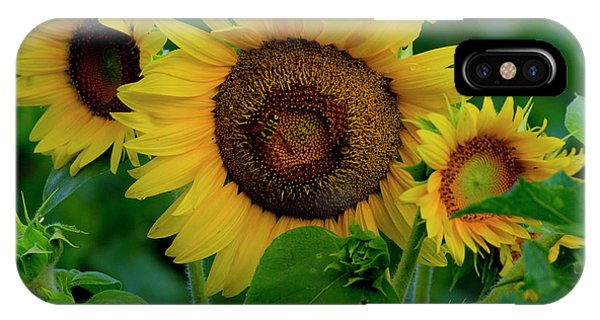 IPhone Case featuring the photograph Sunflower 2017 9 by Buddy Scott