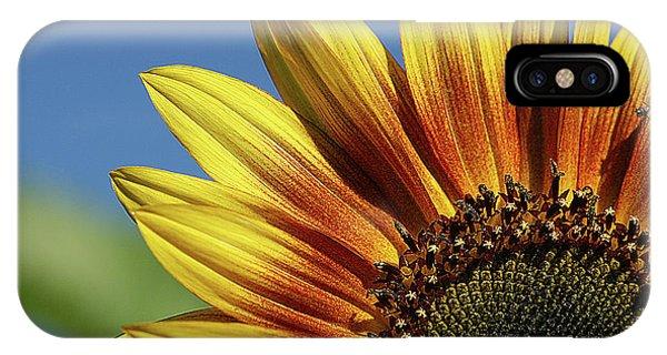 Sunflower 38 IPhone Case