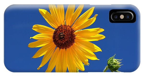 Sunflower Against Blue Sky IPhone Case