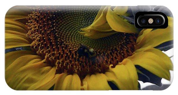 Sunflower Bee IPhone Case