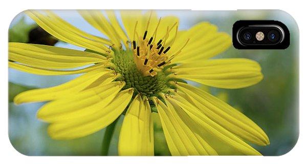 Sunflower Close-up IPhone Case