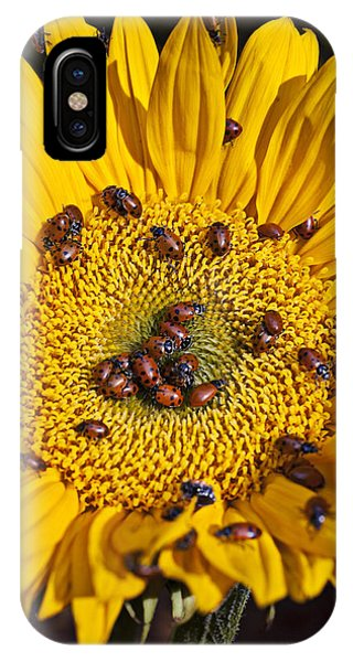 Ladybug iPhone Case - Sunflower Covered In Ladybugs by Garry Gay