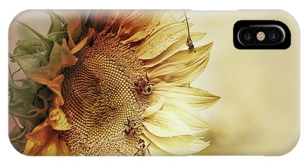 Sunflower Seeds iPhone Case - Sunflower Days by Susan Capuano