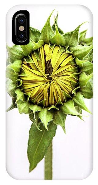 Sunflower Seeds iPhone Case - Sunflower by Diane Diederich