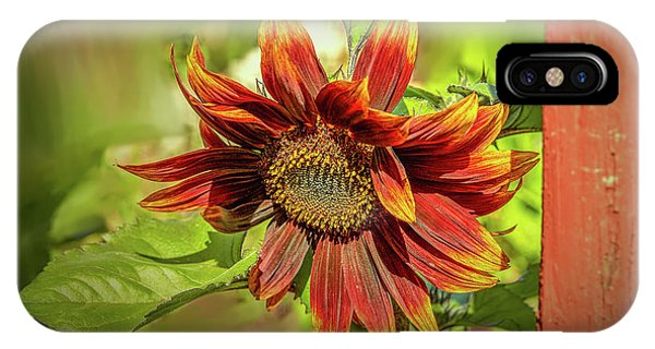 Sunflower #g5 IPhone Case