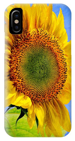 Close Up Floral iPhone Case - Sunflower Plant by Christina Rollo