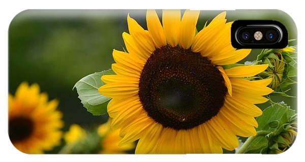 Sunflower Group IPhone Case