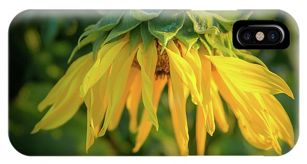 IPhone Case featuring the photograph Sunflower In Evening Light by John Brink