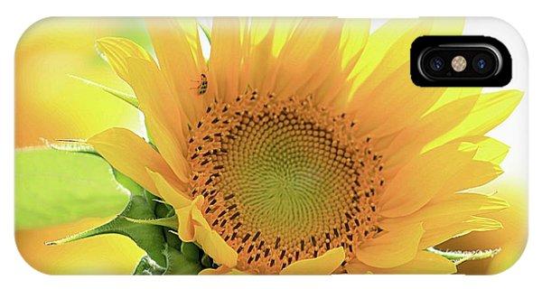 Sunflower In Golden Glow IPhone Case