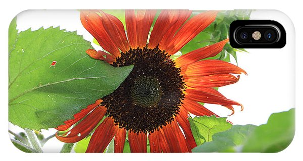 Sunflower In The Afternoon IPhone Case