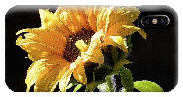 Sunflower Isloated On Black IPhone Case