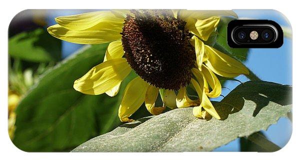 Sunflower, Lemon Queen, With Pollen IPhone Case