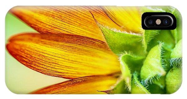 Sunflower Macro 1 IPhone Case