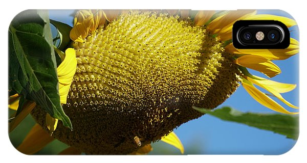 Sunflower, Mammoth With Bees IPhone Case