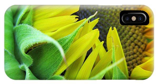 Sunflower Seeds iPhone Case - Sunflower by Marianna Mills