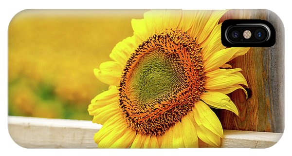 Sunflower On The Fence IPhone Case