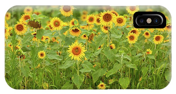 Sunflower Patch IPhone Case