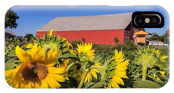 Sunflower Red Barn IPhone Case