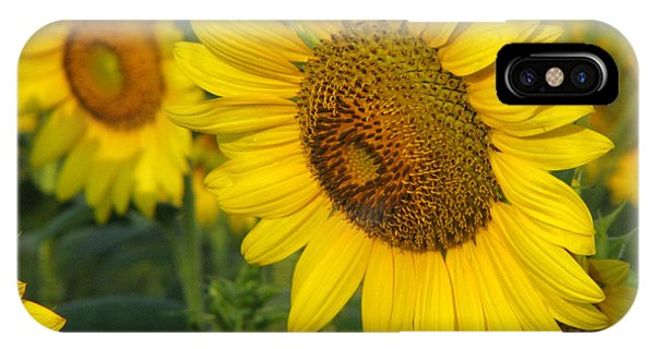 Sunflower iPhone Case - Sunflower Series by Amanda Barcon