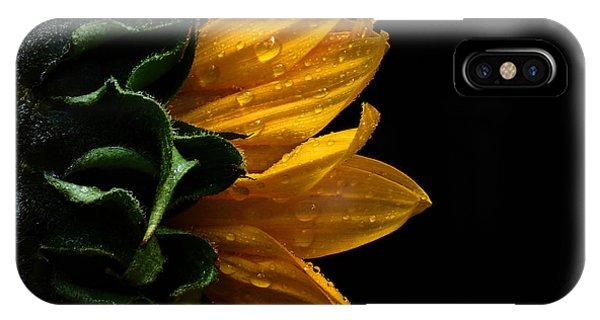 Sunflower Series IIi IPhone Case