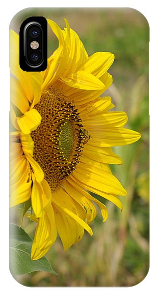 Sunflower Show Off IPhone Case