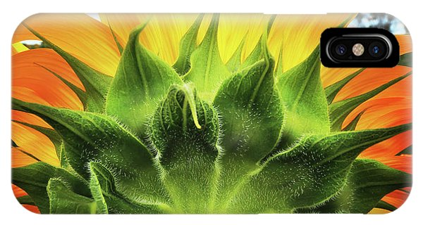 Sunflower Sunburst IPhone Case