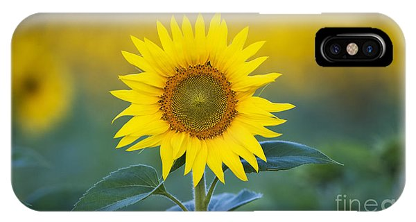 Sunflower iPhone X / XS Case - Sunflower by Tim Gainey