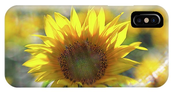 Sunflower With Lens Flare IPhone Case