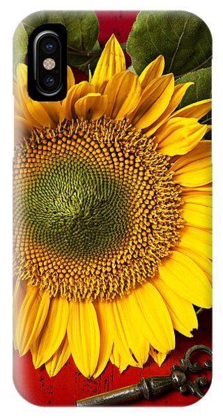 Sunflower Seeds iPhone Case - Sunflower With Old Key by Garry Gay