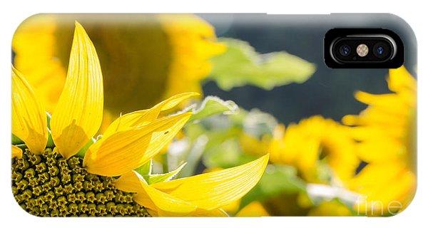 Sunflowers 14 IPhone Case