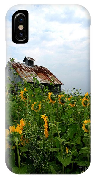 Sunflowers Along Rt 6 IPhone Case