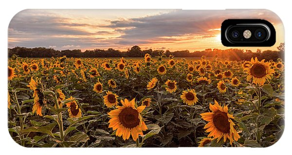 Sunflowers At Sunset IPhone Case