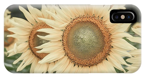 Sunflowers Detail IPhone Case