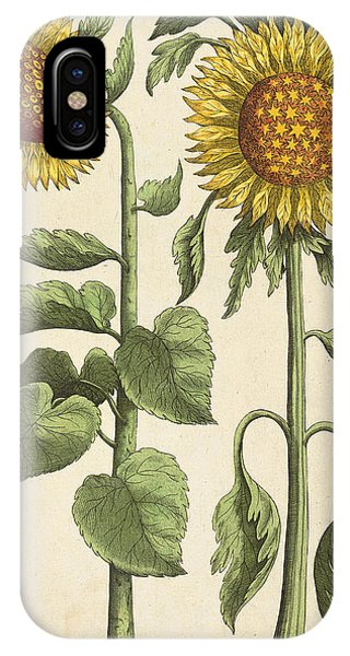 Baroque iPhone Case - Sunflowers Illustration From Florilegium by Emanuel Sweert