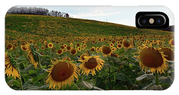 Sunflowers Fields  IPhone Case