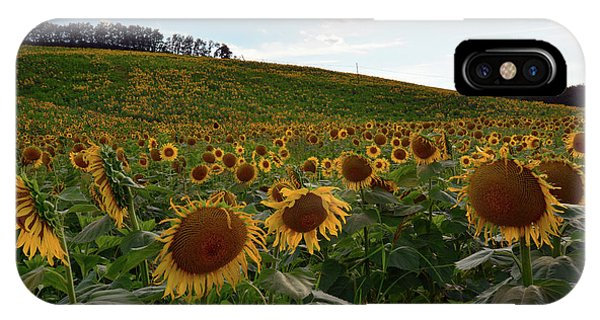 Sunflowers Fields  IPhone Case