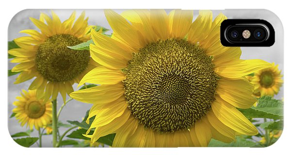 Sunflowers IIi IPhone Case