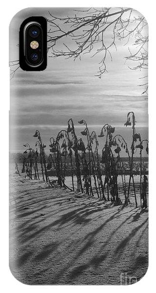 Sunflowers In The Winter Sun IPhone Case