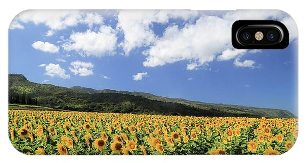 Sunflowers In Waialua IPhone Case