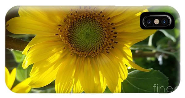 Sunflowers-just Bloomed IPhone Case